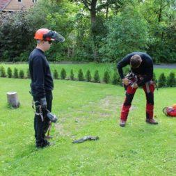 baumfaeller91 - Der Baum muss weg – Kletterer am Werk