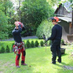 baumfaeller10 - Bildergalerie – Der Garten 3