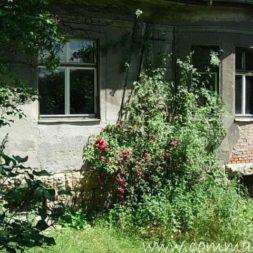bestandsaufnahme im garten 11 - Bildergalerie – Der Garten 5