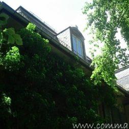 bestandsaufnahme im garten 34 - Bildergalerie – Der Garten 5