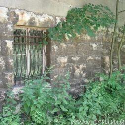 bestandsaufnahme im garten 49 - Bildergalerie – Der Garten 5