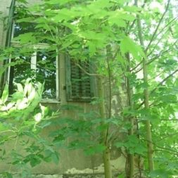 bestandsaufnahme im garten 54 - Bildergalerie – Der Garten 5