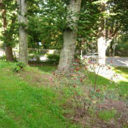 bilder vom garten12 - Bildergalerie – Der Garten 1