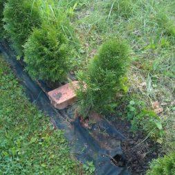 diebstahl der heckenpflanzen 5 - Bildergalerie – Der Garten 1
