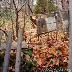 einbruch und vandalismus 12 - Bildergalerie – Der Garten 5