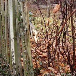 einbruch und vandalismus 14 - Bildergalerie – Der Garten 5