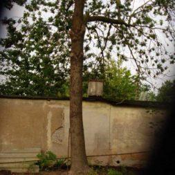 wpc terrassenbau 501 - Bildergalerie – Der Garten 3