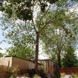 bau der gabionen terrasse9 - Der Bau unserer Gabionen Terrasse zum Abfang des Hangs