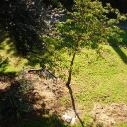 bilder vom garten6 - Der Bau unserer Gabionen Terrasse zum Abfang des Hangs