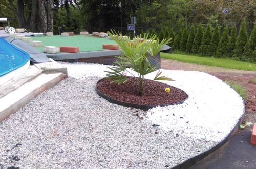palme und neuer rasen am pool 9 - Carrara Kies und Palmen am Pool
