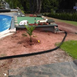 winterharte palmen an den pool pflanzen 6 - Carrara Kies und Palme am Pool