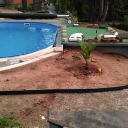 winterharte palmen an den pool pflanzen 7 - Carrara Kies und Palme am Pool