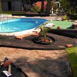 winterharte palmen an den pool pflanzen 8 - Carrara Kies und Palme am Pool