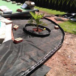 winterharte palmen an den pool pflanzen 9 - Carrara Kies und Palme am Pool