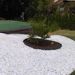 winterharte palmen an den pool pflanzen 30 - Palmen für den Pool - Urlaubsstimmung im eigenen Garten