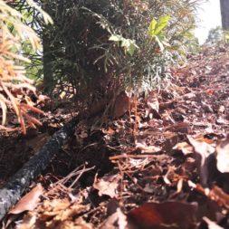 IMG 20200515 162219 - Automatische Heckenbewässerung selber bauen