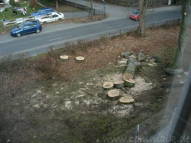 Der Baum kommt weg