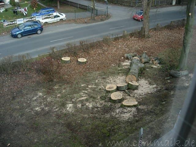 dscn6013 - Der Baum kommt weg