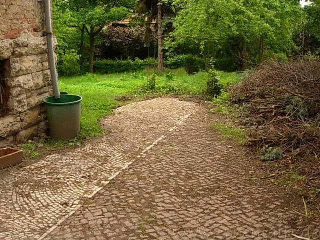 dscn6167 - Überraschung im Garten